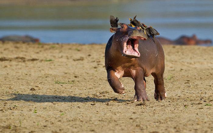 animalesalvajes1