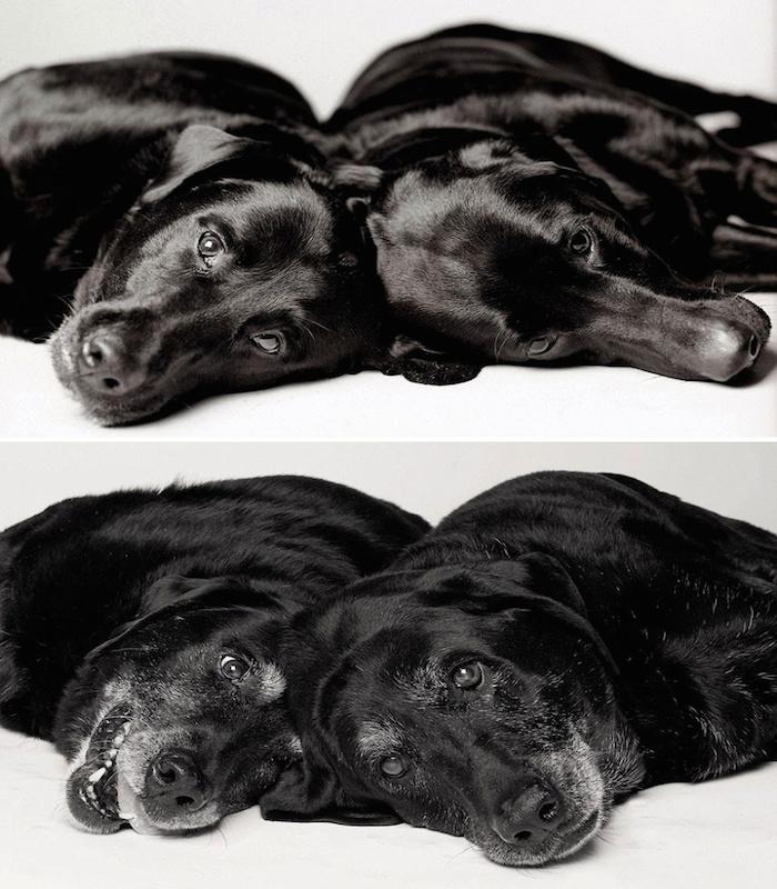 perros9