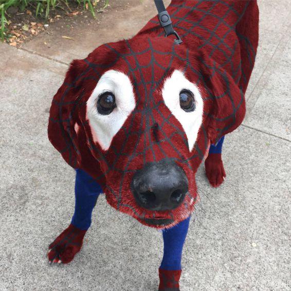 perro-labrador-photoshop5