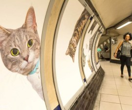 Gatos Publicidad 5