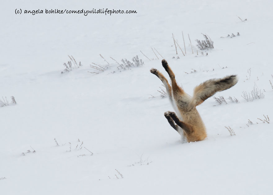The Comedy Wildlife Photography Awards