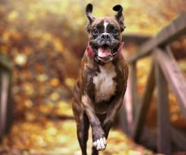 Un perrito feliz