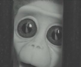 Monkey Love Experiment