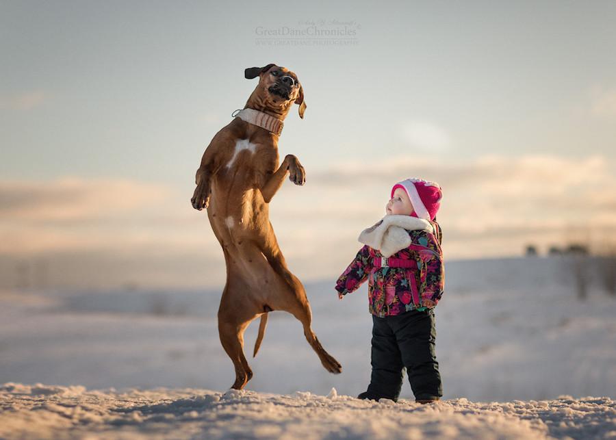 Perrito saltando