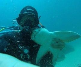 La amistad entre un buzo y un tiburón