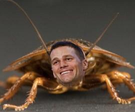 Cucuracha Tom Brady