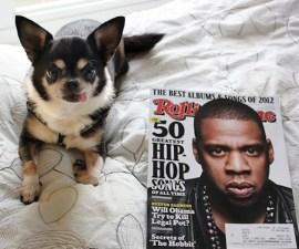 Jay-Z perrita