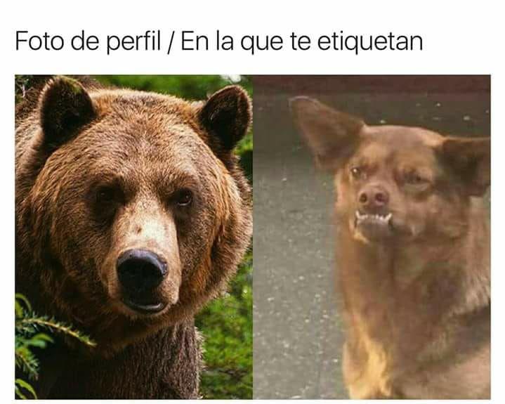 18582348_618585818341322_7376183725908832776_n la historia detrás el meme el perrito chilaquil