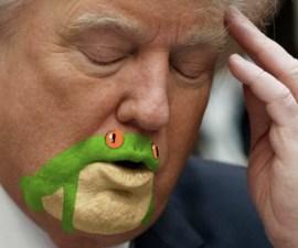 Donald Trump tiene cara de sapo