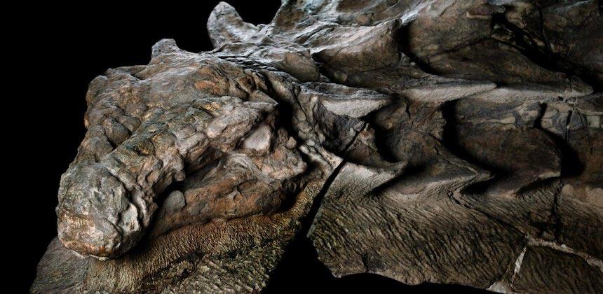 Fósil de un ankylosaurio