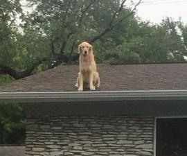 Huckleberry - El perrito en el techo