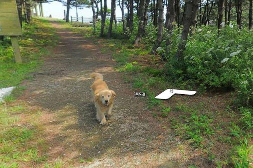 El perrito que apareció en un mapa virtual