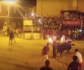 """El toro que se """"suicida"""" durante una fiesta en España"""