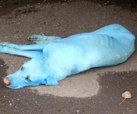 Perros azules en Bombay