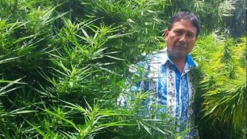Regidor de Tochimilco, Rufino Pérez, en plantío de marihuana