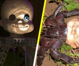 Cangrejo idéntico al horrible muñeco de Toy Story