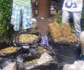 Detienen a dos jóvenes por trasladar marihuana en bolsas de basura en la colonia Morelos