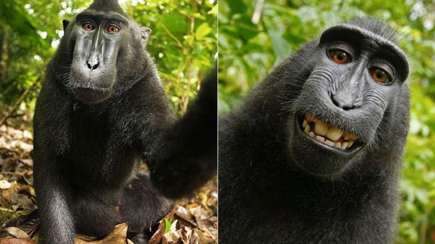 Naruto, mono que se sacó selfie
