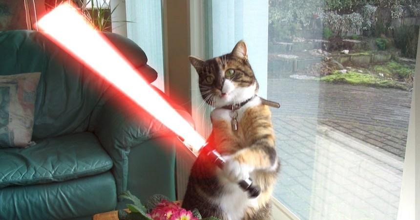Gato que usa sable de luz