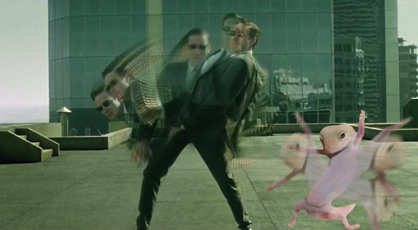 Dave el gecko - The Matrix