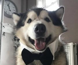 Phil, el perrito de Tinder