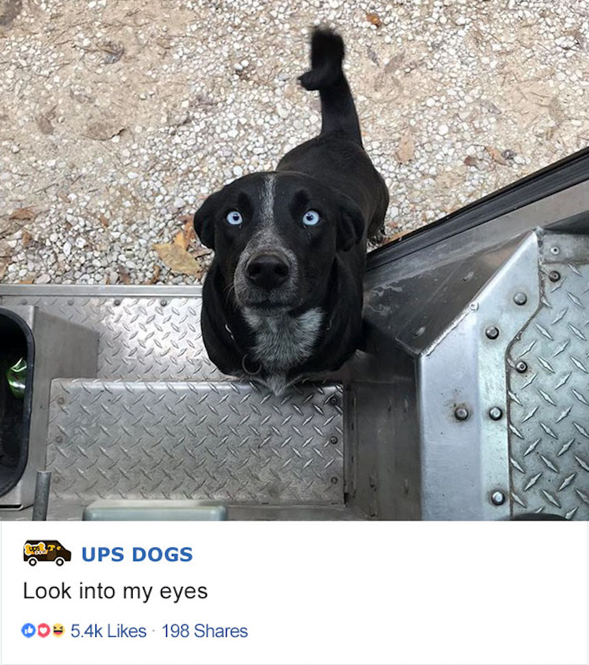 Empleados de UPS y perritos - Mirada