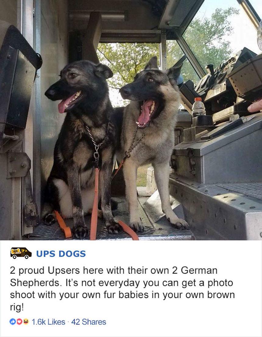 Empleados de UPS y perritos - Perros contentos