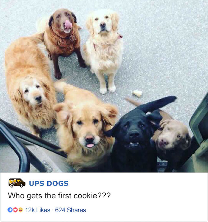 Empleados de UPS y perritos - Filas de fans