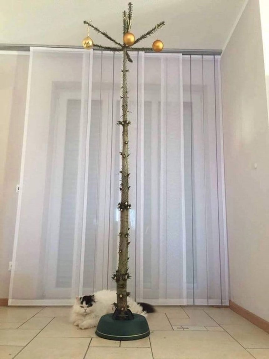 Protegiendo árboles de Navidad - Pelones