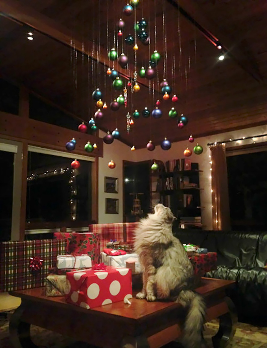 Protegiendo árboles de Navidad - Esferas en el techo