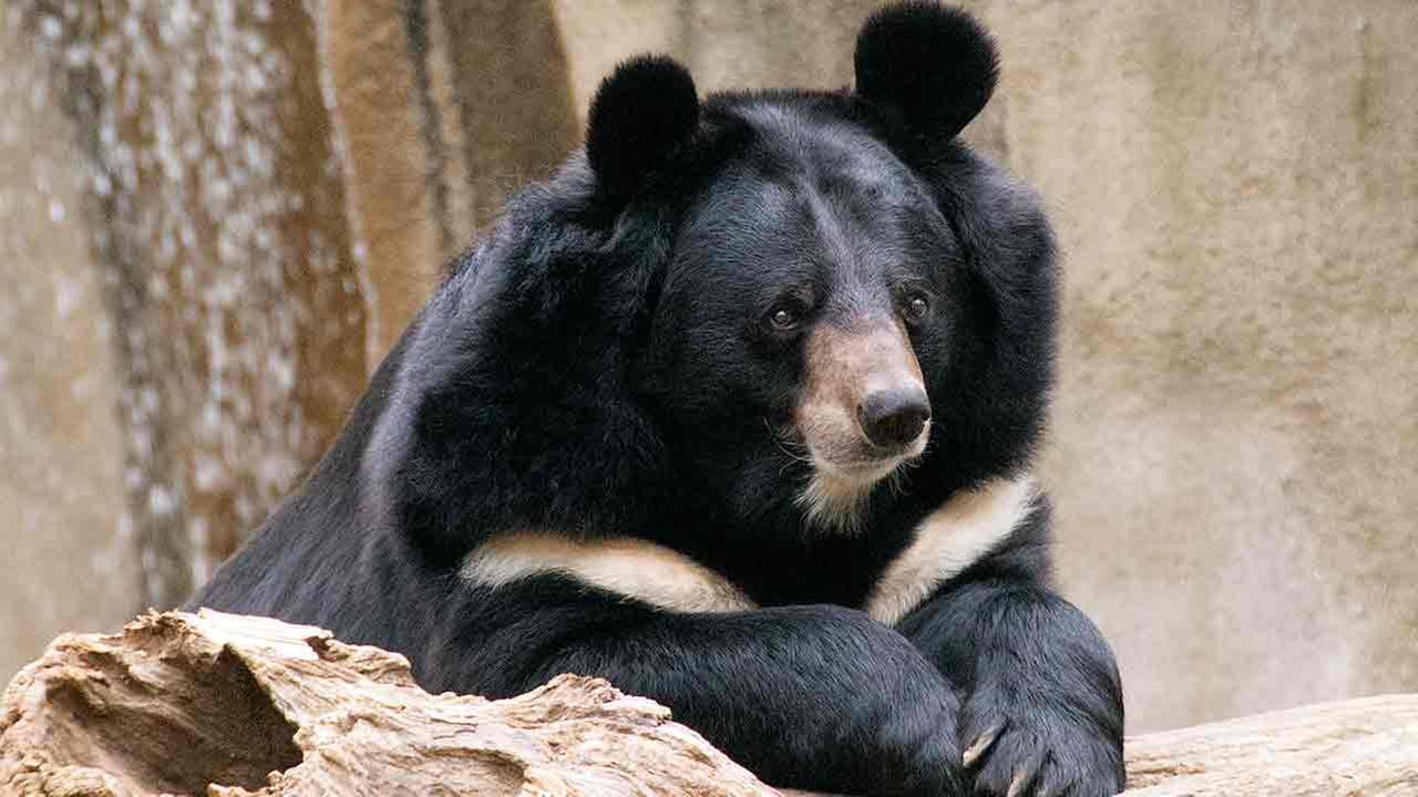 En la nota idiota del día: Una familia crió a un oso creyendo que era un perro