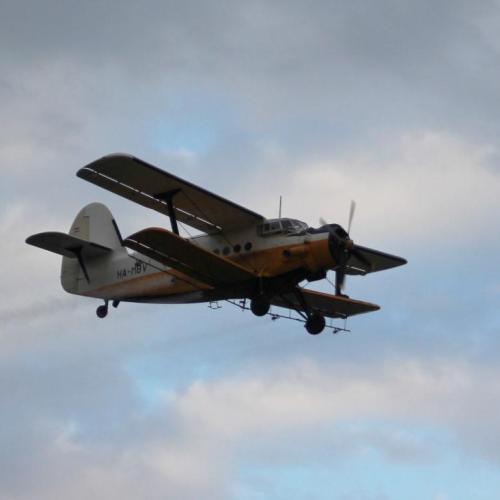 A légtér ura pusztítja a szúnyogokat Sopronban!
