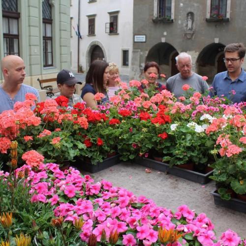 Háromszáz tő virággal gazdagodott Sopron két közterülete!