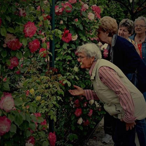 Folytatódik a népszerű rózsakerti nyáresti séták programsorozat Fertődön