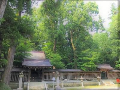 日向神社本殿の写真