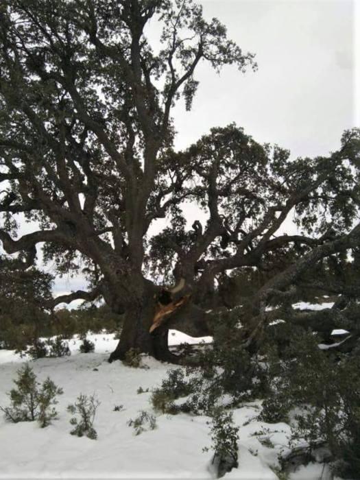 Gran Cascarra partida por la nieve