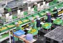 Nufri inyecta un millón de euros para su instalación fotovoltaica