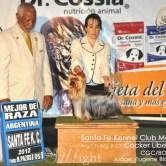 CH.-Cocker-Liberi-Gaias13 Exposiciones