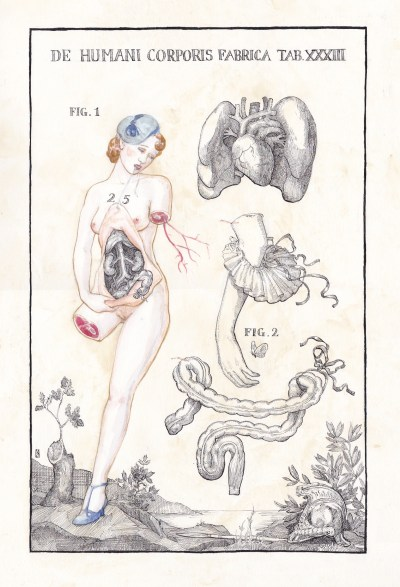 Anatomical Venus IV