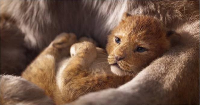 Image extraite du Roi Lion, adaptation live-action