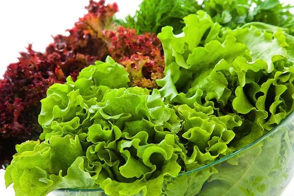 lettuce-varieties