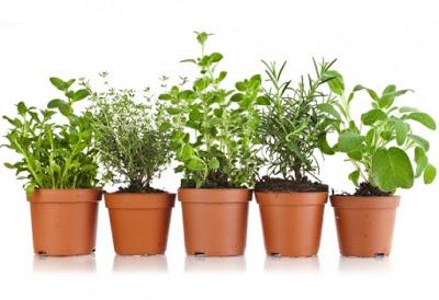 ervas-aromaticas