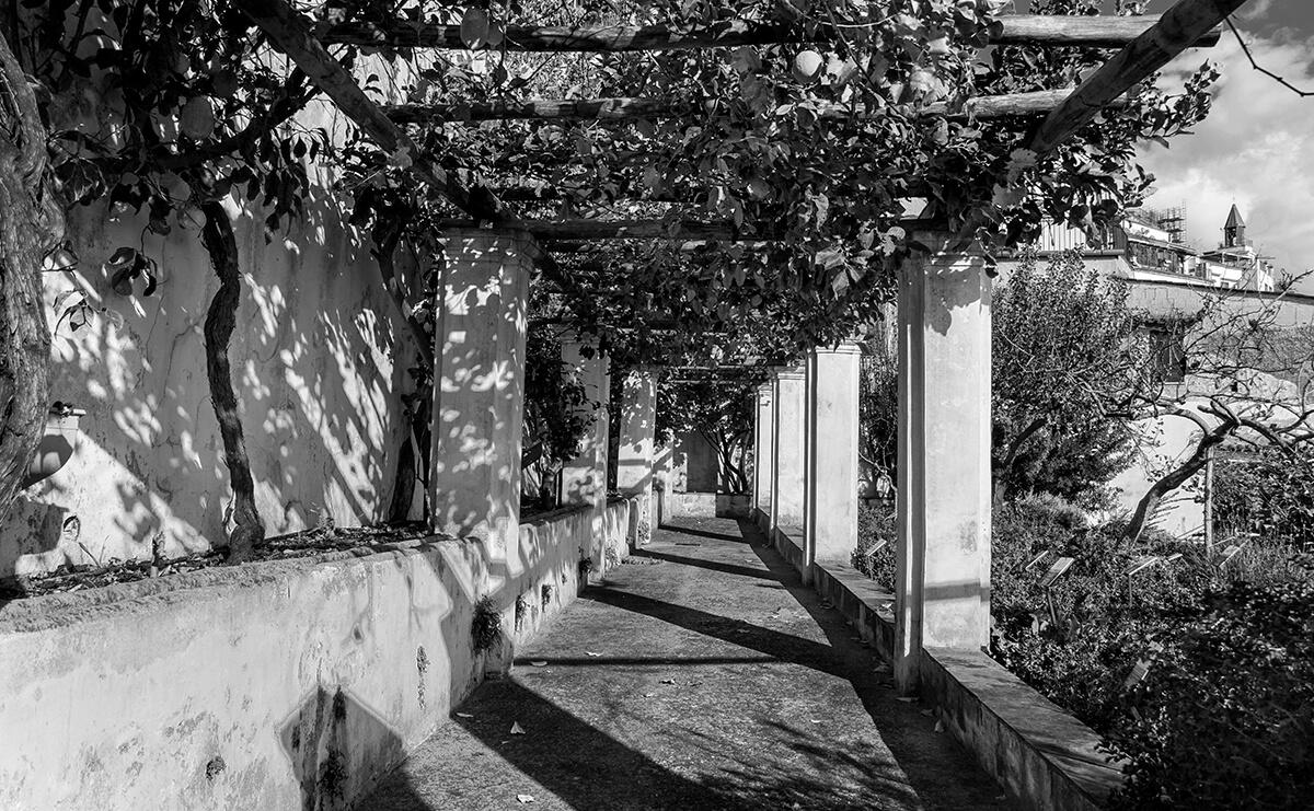 Pergolato del Giardino della Minerva a Salerno. Foto di Sossio Mormile