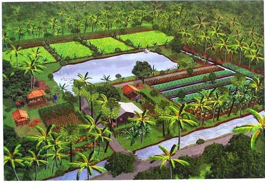 Organic farming in Thailand