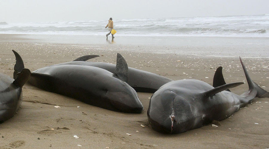 Whales And Dolphins In Danger Of Highly Toxic Waste Still