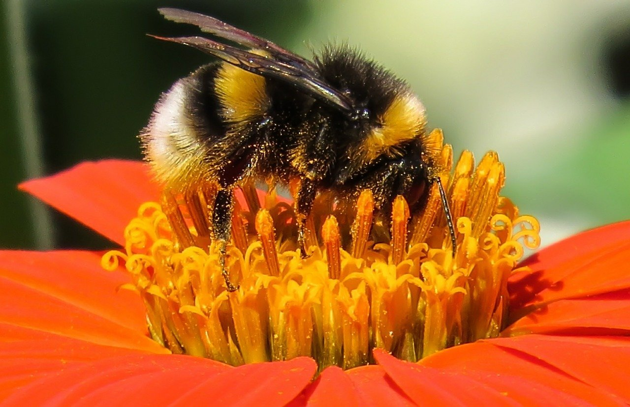 New Research Shows Bumblebees Possess Emotional States