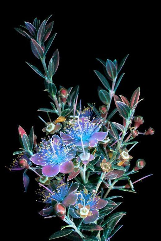 flower uv