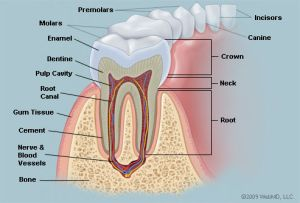 New mouthwash may render cavities a thing of the past  Health & Wellness  Sott
