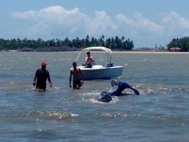 Equipe de veterinários trabalha para desencalhar baleia (Foto: Priscila Bitencourt/TV Sergipe)