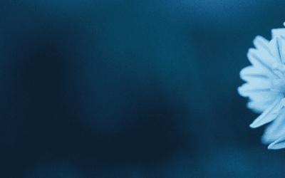 Zie jezelf als een bloem